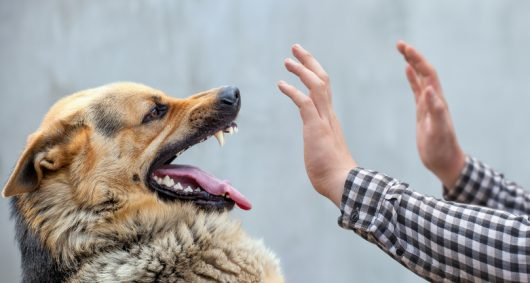 Making Sense of Dog Attacks: Why Do Dogs Bite and What You Should Do if They Do