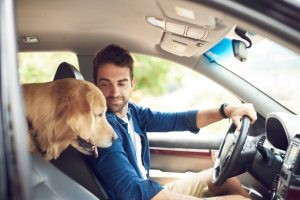 Learn How California Drivers Can Safely Drive with Their Pets